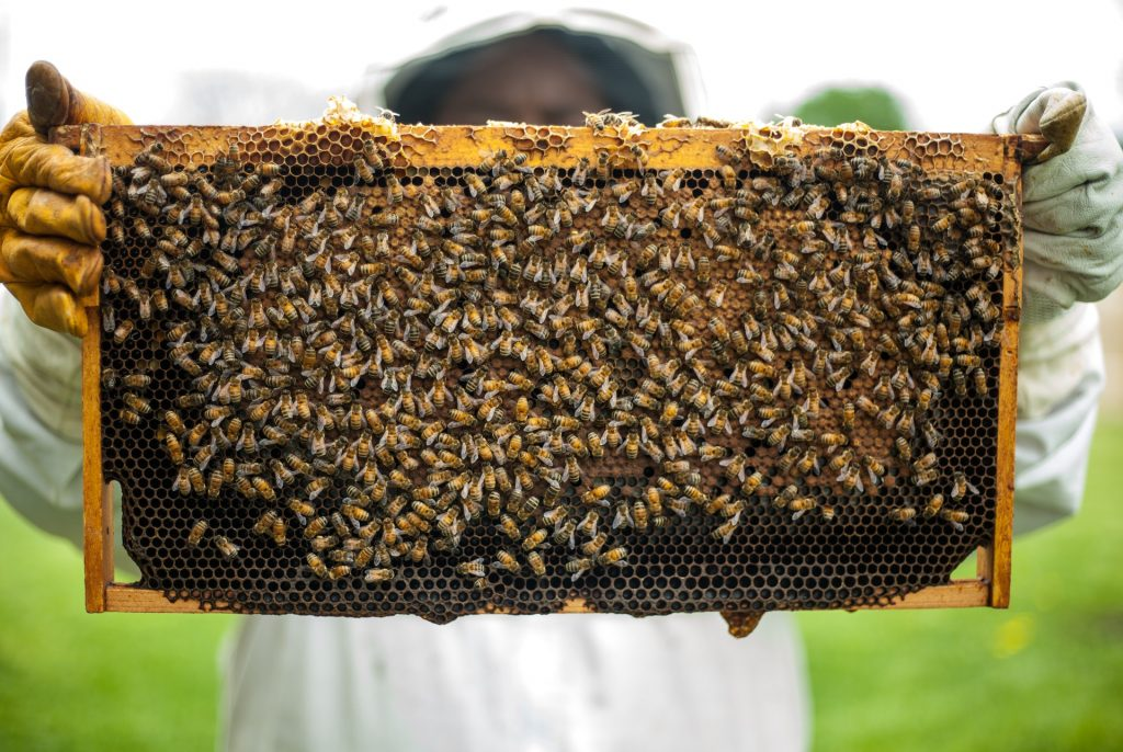 Bees with bee farmer